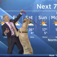 Weatherman vs Dog News Blooper! Hilarious Video!